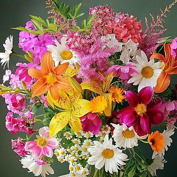 Набор для творчества Рыжий кот Холст с красками по номерам Красивые цветы 20*20см