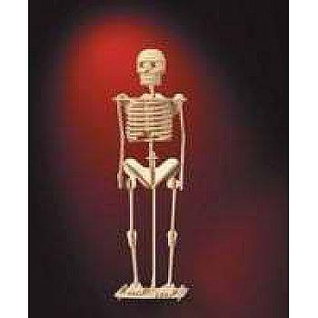 Сборная деревянная модель Чудо-Дерево Скелет человека (3 пластины)