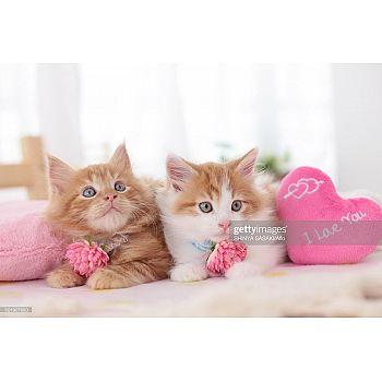 Набор для творчества Рыжий кот Холст с красками по номерам Котята с сердечками 30х40 см