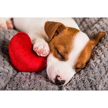 Набор для творчества Рыжий кот Холст с красками по номерам Спящий щеночек 30х40 см